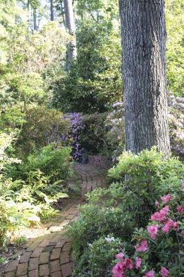 dad's garden 4