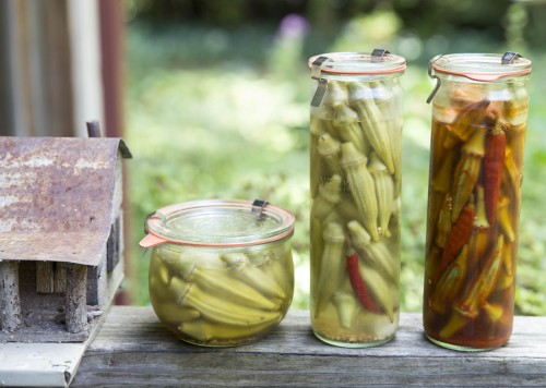 Okra pickles + smoky okra pickles 500x356 Roasted Peach Butter goes for a walk in the woods