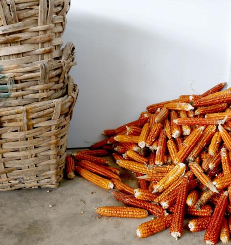 antique corn