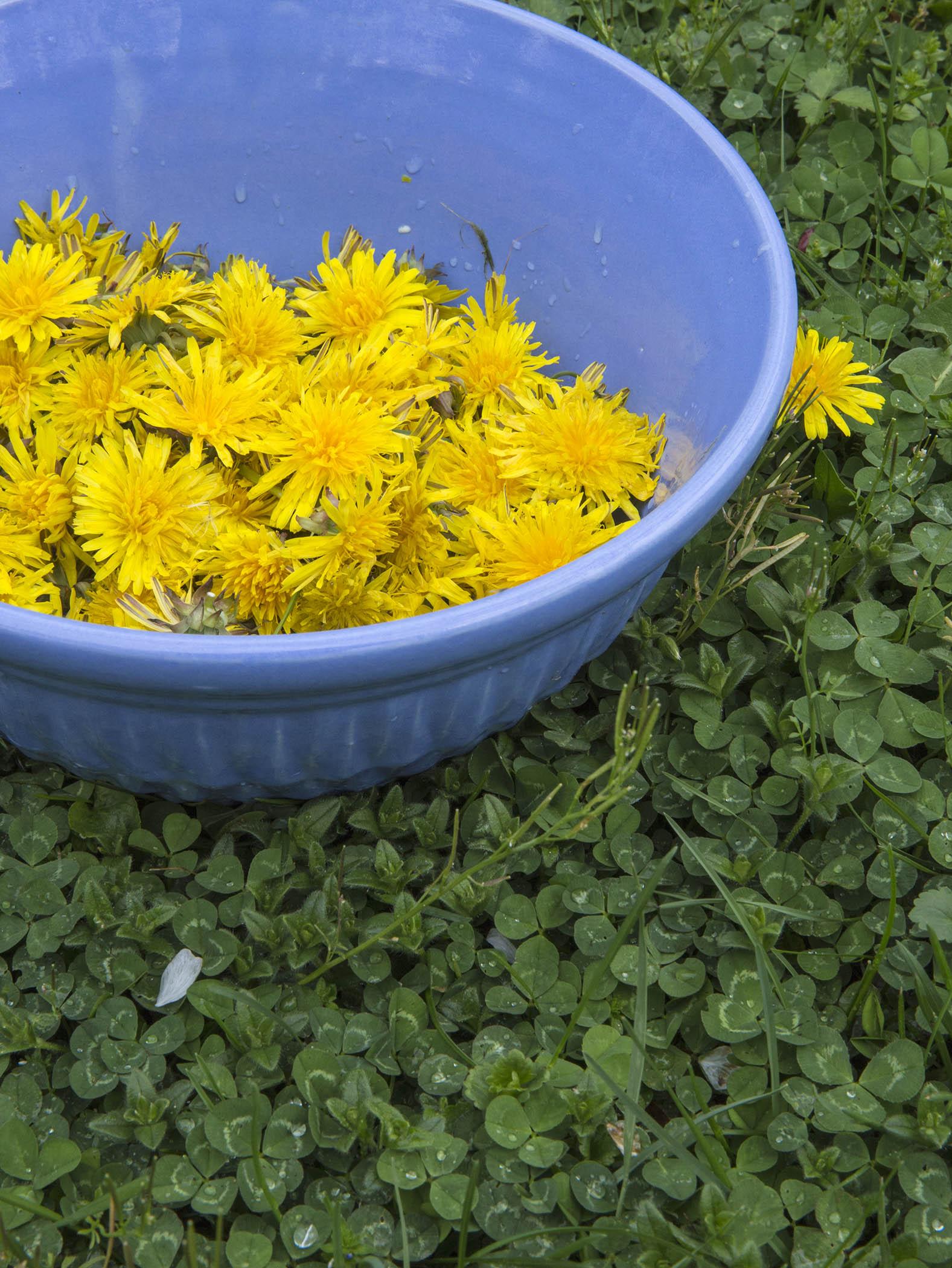 dandelion cordial spritz