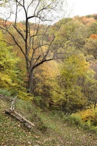 cabin walnut tree in fall s